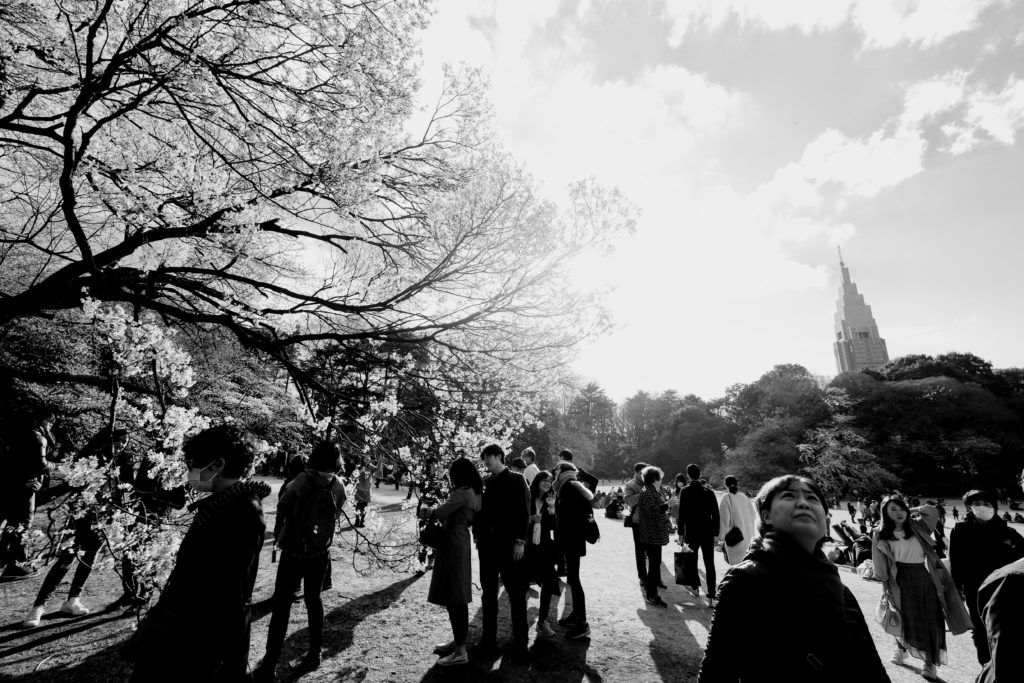 A photo of Shinjuku Gyoen National Garden. It's cherry blossom season and a crowd of people gather in the park to see them and wander around.